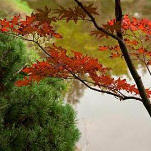 Sophrologie et Meditation saint nazaire